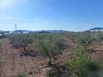 Urban Land for sale - Building Plots for sale in Macisvenda, Murcia | Alicante, Macisvenda