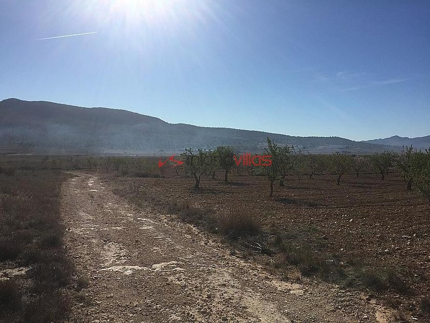 Plots of Land for Sale in Salinas (Plot 190 10.000m2) | Alicante, Salinas in Inland Villas Spain
