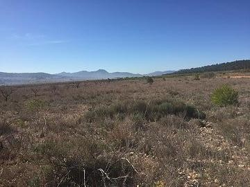 Plots of Land for Sale in Salinas (Plot 190 10.000m2) | Alicante, Salinas