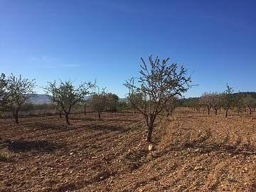 Plots of Land for Sale in Salinas (Plot 186/14858m2) | Alicante, Salinas