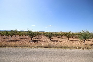 Building plot of land with almond trees