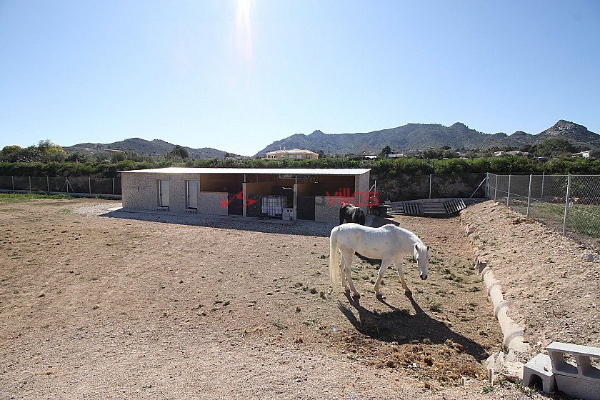 Sands of Time - horses and animal lovers retreat in Inland Villas Spain