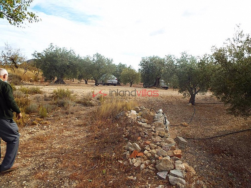 Plot of land with Olive Grove in Inland Villas Spain